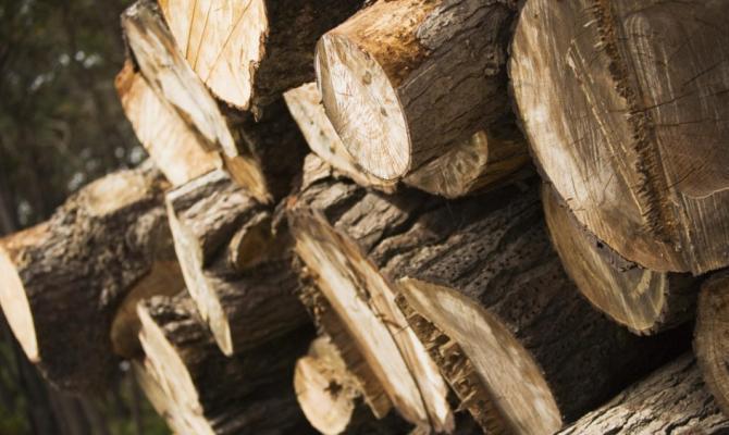 Город в Чехии снижает цены на дрова, заготовленные в его лесах