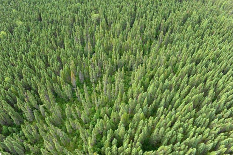 США взорвали решение ВТО в многолетнем споре о лесоматериалах в Канаде
