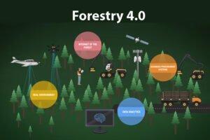 Автоматизированная заготовка леса с использованием робототехники