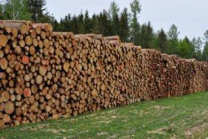 Цены на еловые круглые лесоматериалы в Китае падают