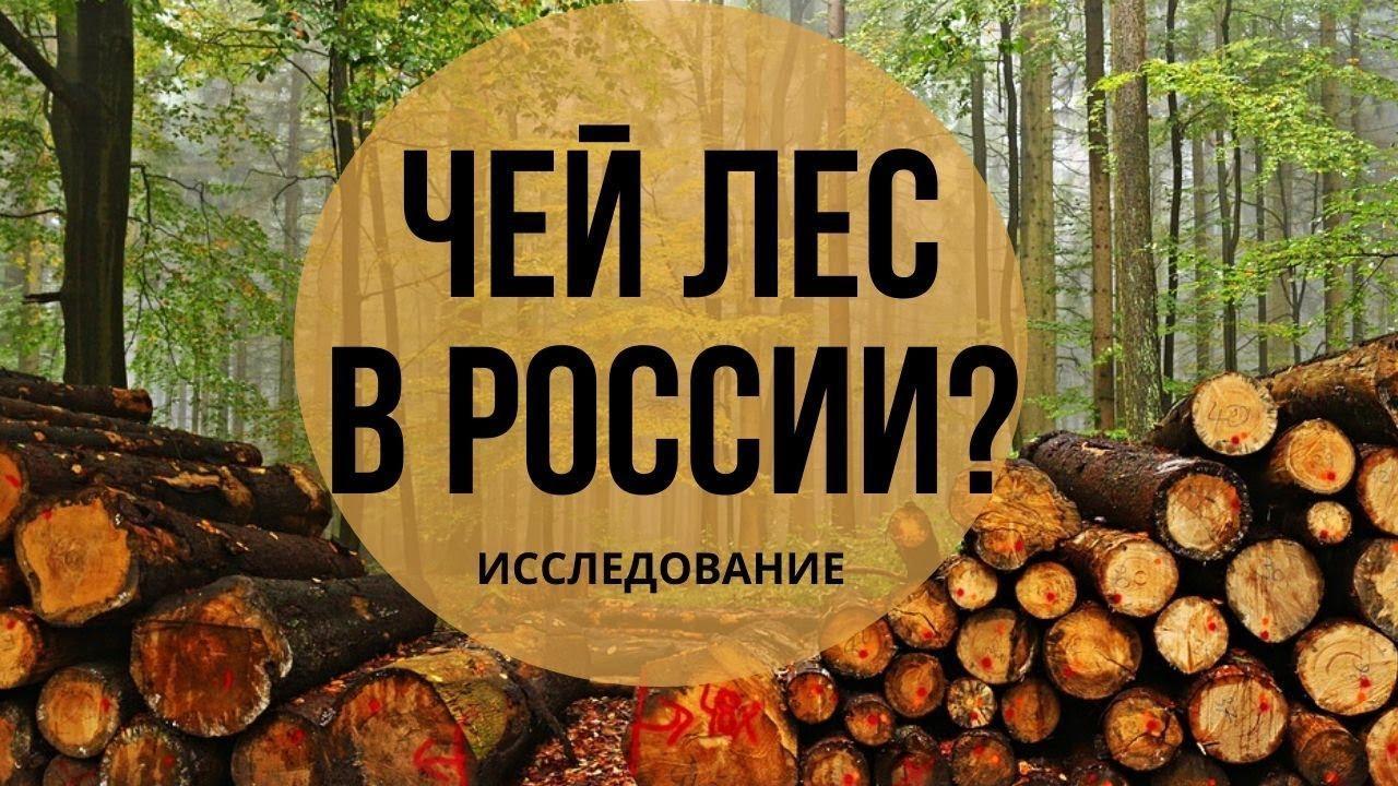 РФ: ЗАЧЕМ НУЖНА ЛЕСНАЯ ГОСКОРПОРАЦИЯ (Отчет и видео)