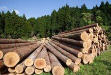 Средние цены на лесоматериалы в России 2012-2020.06