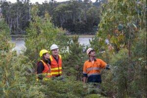 Стремительно растущий спрос на нашу древесину