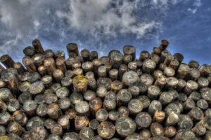 Владельца лесопильного завода обвиняют в хищении древесины на сумму 750000 долларов у лесорубов