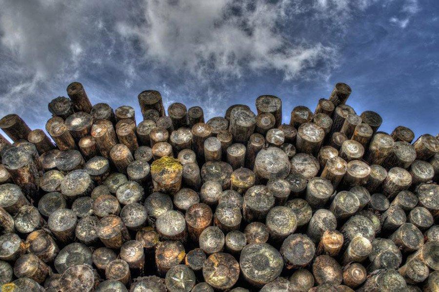 You are currently viewing Владельца лесопильного завода обвиняют в хищении древесины на сумму 750000 долларов у лесорубов