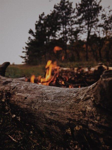 You are currently viewing Чтобы предотвратить лесные пожары, надо быстро вывести из леса поврежденную древесину