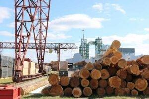 Заветные кубометры успеха: мозырской деревообработке нужны инициатива и крепкая команда