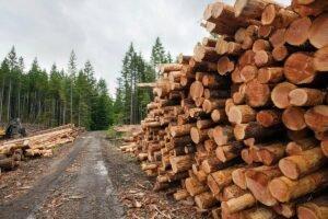 Минлесхоз подготовил проект госпрограммы «Белорусский лес» на 2021-2025 гг