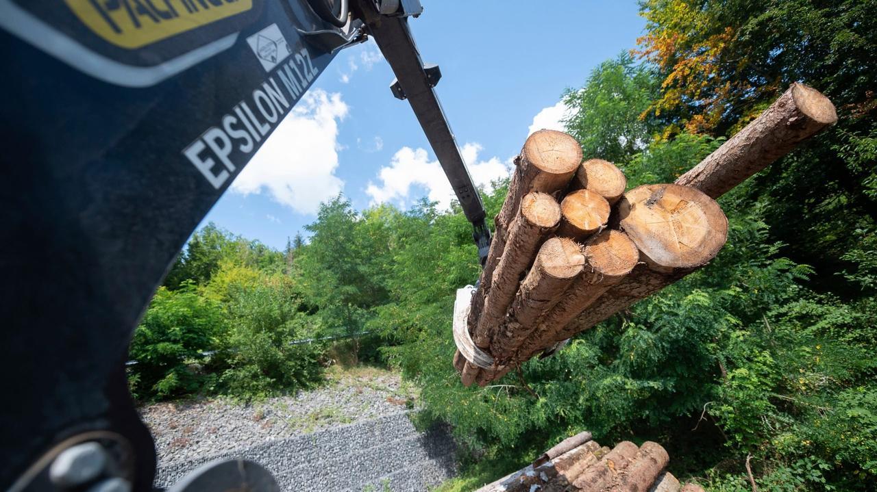 Китай принимает древесину поврежденную короедом  из Германии, но не принимает из Канады