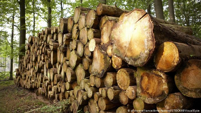 Що за п'ять років дав Україні мораторій на експорт лісу-кругляку