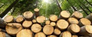 Розробка механізму продажу деревини відбувається без залучення бізнесу – ЄБА