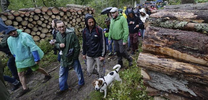 Возвращение «кругляка»: какие последствия будет иметь завершение спора с ЕС по экспорту леса