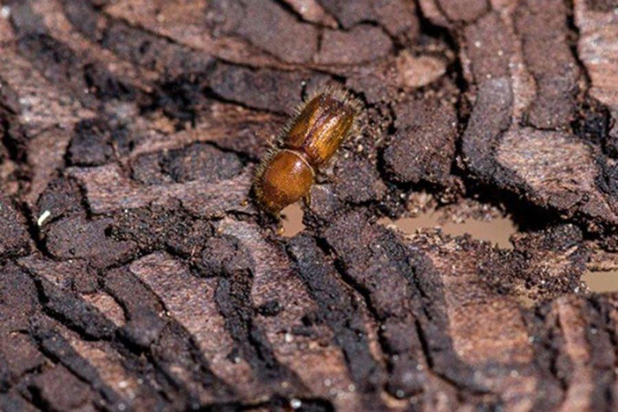 Швеция ожидает 7 млн кубометров поврежденной жуками древесины в 2020 году