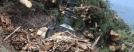 Япония рассматривает возможность выращивать  «энергетические леса» для производства энергии из древесной биомассы