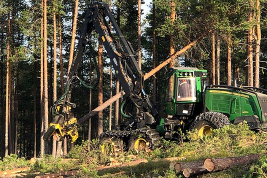 Валовая рубка леса увеличилась в 2019 году, но, как ожидается, снизится в 2020 году