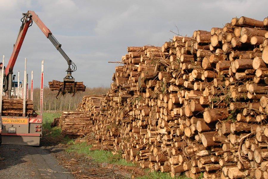 Восстановление после Covid 19 снизит доступность древесины
