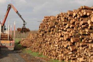 Лесной кризис угрожает комбинатам на фоне гонки за дорогостоящим импортом