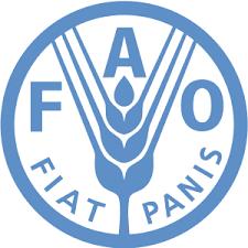 Проект ФАО: Дорожня карта лісового господарства України