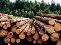 Арбітраж із ЄС щодо заборони Україною експорту лісу-кругляку може коштувати Україні до EUR1 млн +