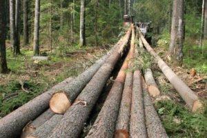 Россия заняла второе место в мире по объемам лесозаготовки