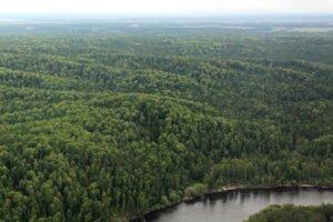 Рослесхоз: регионы РФ будут проходить государственную инвентаризацию лесов раз в десять лет