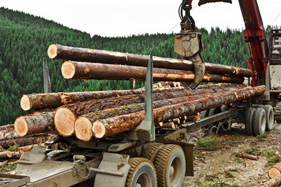 Лесная промышленность закупает круглый лес у России из-за блокировки заготовки собственного