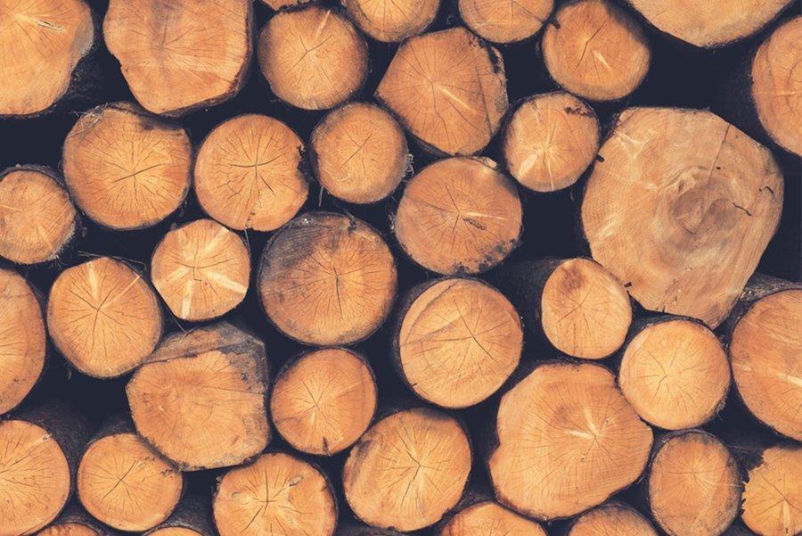 You are currently viewing Почему в ближайшие годы древесина станет популярной?