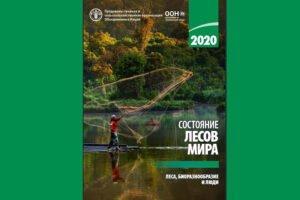 Состояние лесов мира в 2020 году: леса, биоразнообразие и люди