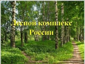 Динамику развития лесного комплекса представили в Совете Федерации