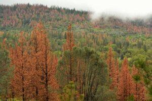 Исследователи изучают влияние повторяющихся засух на различные виды лесов.
