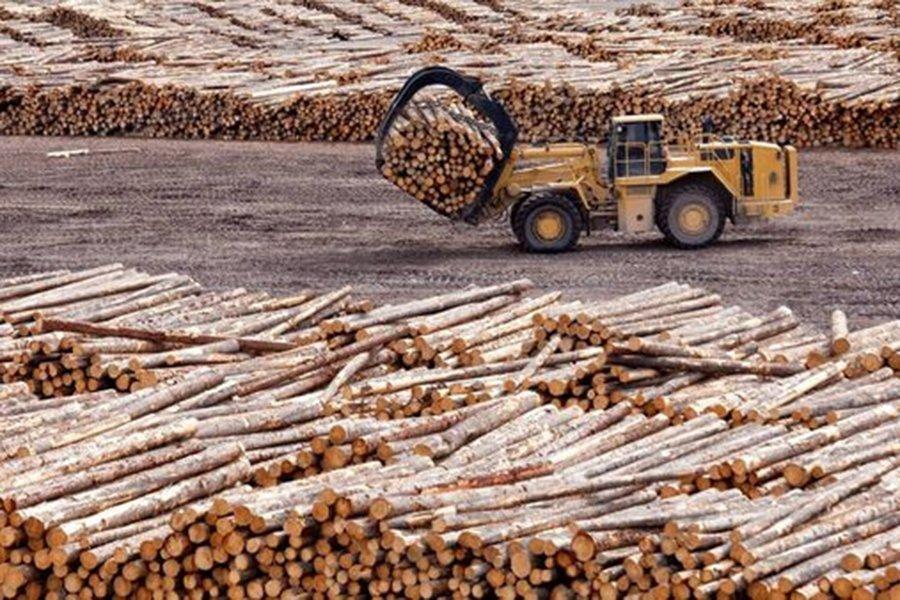 Лесопромышленному комплексу Ирландии не хватает сырья