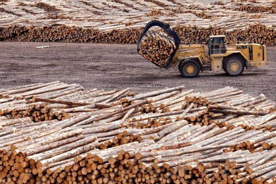 На лесопильных заводах Ирландии закончилась древесина