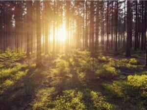 Европейская региональная сеть по мобилизации устойчивой древесины