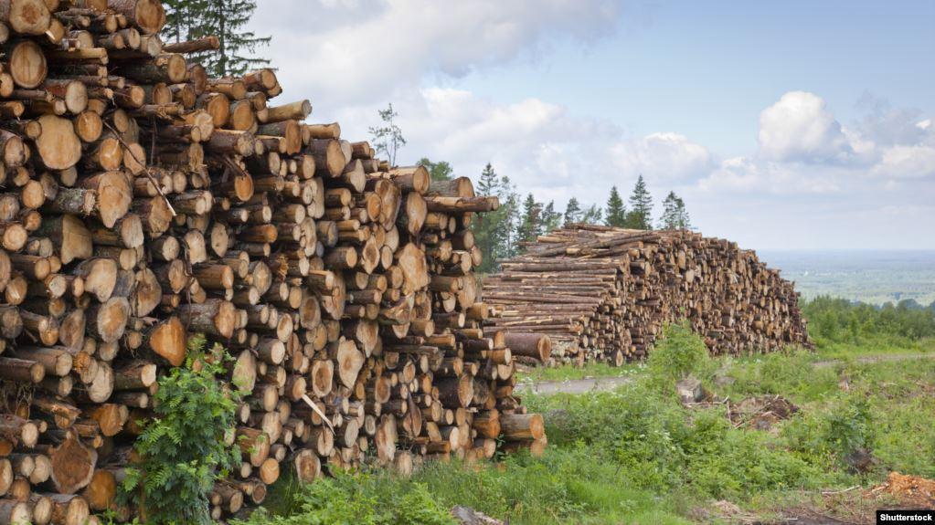 You are currently viewing Використання деревини з України: в Earthsight розкритикували висновки розслідування Ikea