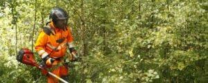 Read more about the article Интерес к ведению лесного хозяйства в Швеции растет