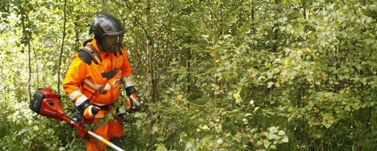 Интерес к ведению лесного хозяйства в Швеции растет