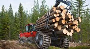 Read more about the article Создание лесной госкорпорации