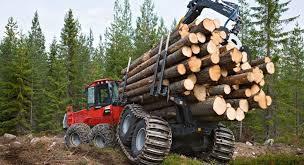 Создание лесной госкорпорации