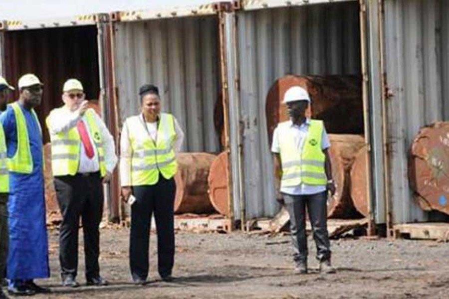 Министры CEMAC рекомендуют запретить экспорт бревен с 2022 года