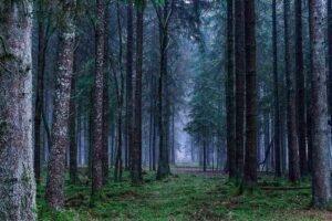 От деревьев до бревен на лесопильные заводы и увеличение прибыли