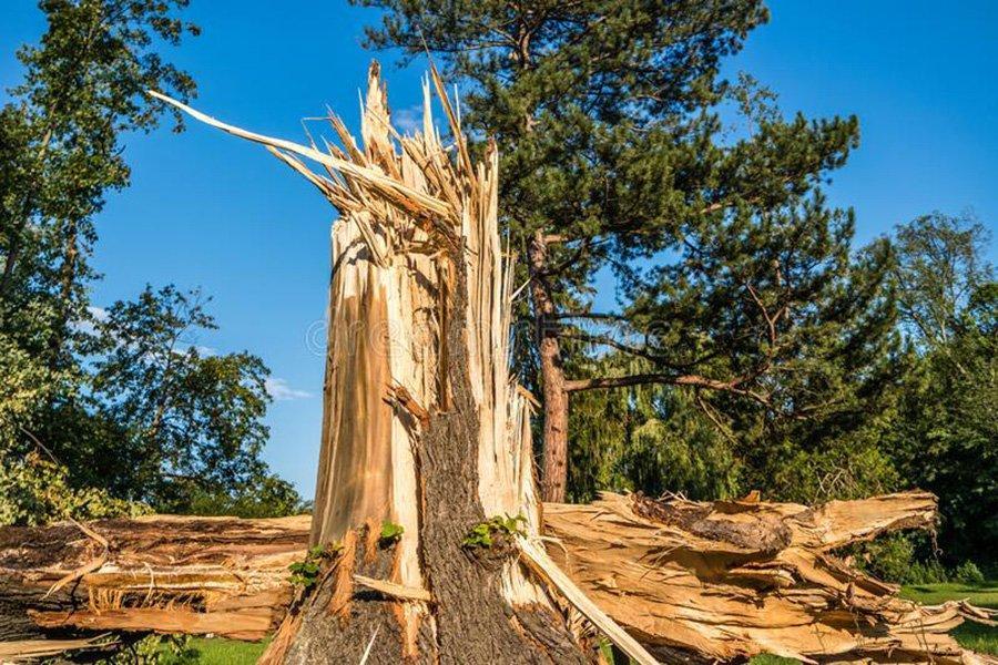 Ураган Лаура повредил около 307 000 га леса