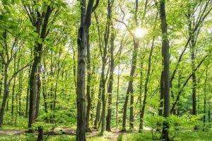 Лесной/деревообрабатывающий сектор в поддержку европейской лесной стратегии