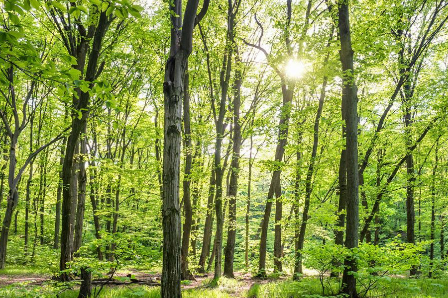 Read more about the article Лесной/деревообрабатывающий сектор в поддержку европейской лесной стратегии