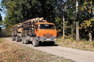 Рост цен в Украине на сосновые круглые лесоматериалы в IV квартале