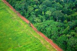 Совместное партнерство по лесам призывает превратить историческую проблему COVID-19 в возможность для лесного хозяйства и устойчивого развития