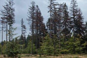 Чешская Lesy CR завершила аукцион по продаже леса на корню