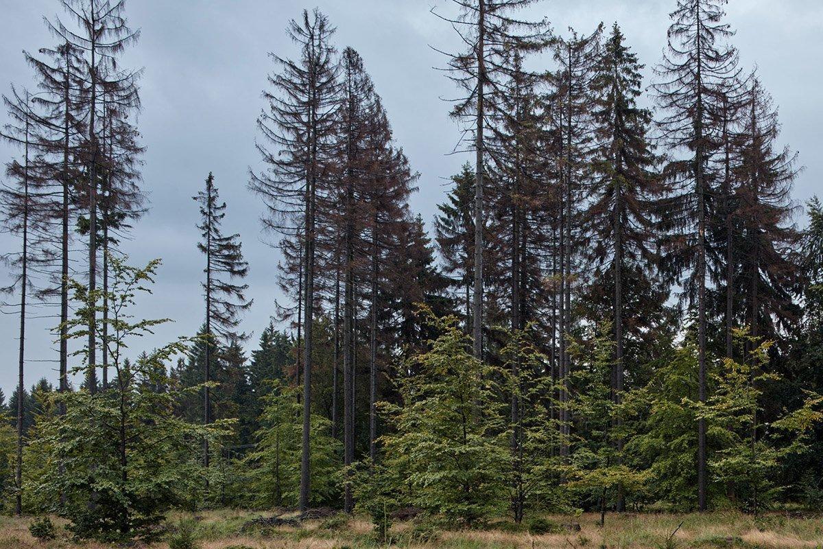 You are currently viewing Чешская Lesy CR завершила аукцион по продаже леса на корню