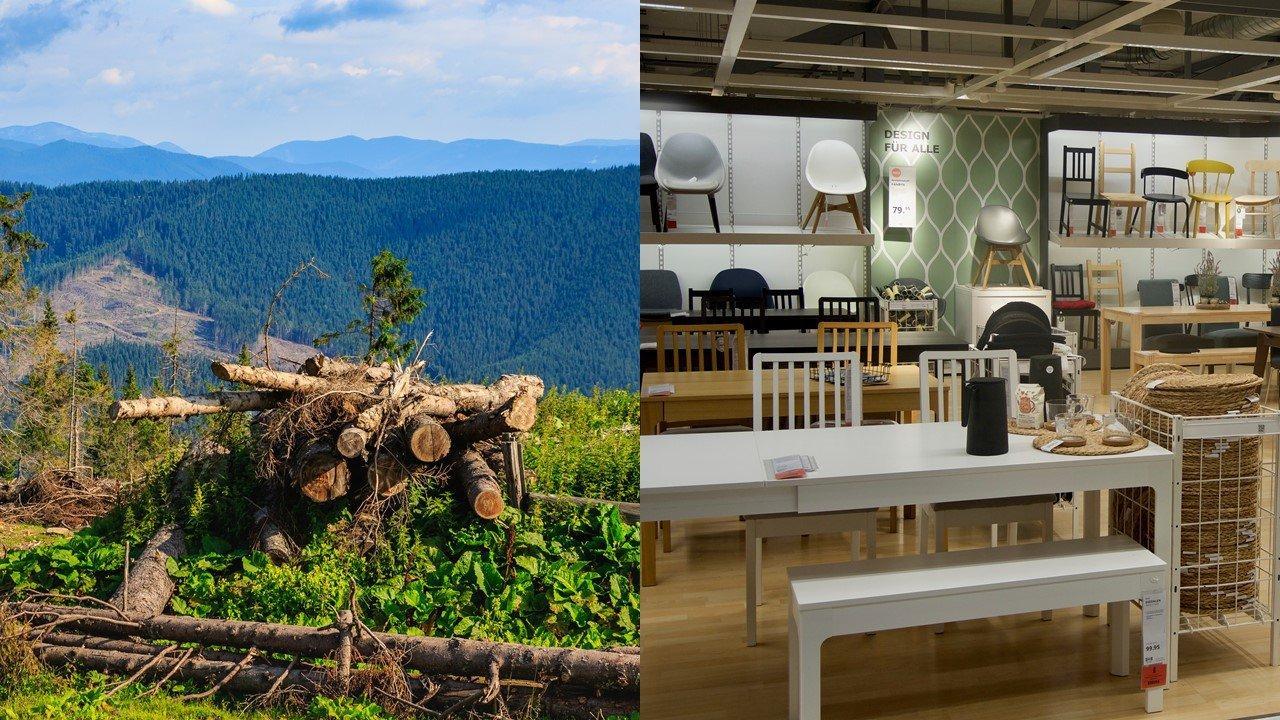 Федеральное правительство Швейцарии возбудило дело против IКЕА за неправильное  декларирование происхождения древесины
