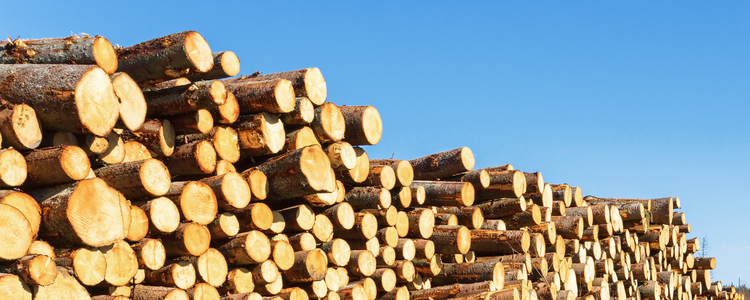 Цены на круглый лес продолжают снижаться