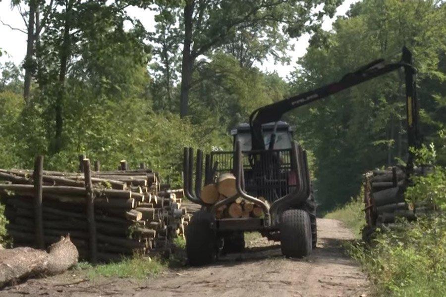 Отдельные переговоры и контракты на промышленную древесину лиственных пород
